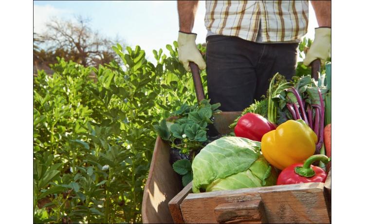 Предварительные данные по промышленности и сельскому хозяйству Армении за июль 2017-го