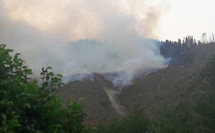 Пожар в Боржомском ущелье: Грузия запросила помощи у Турции