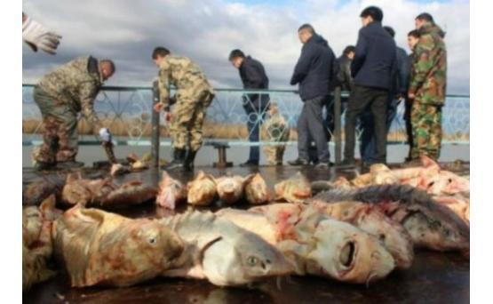 Казахстанские пограничники задержали азербайджанских браконьеров