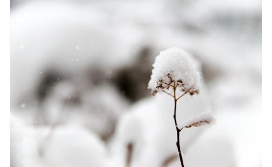 Снежный циклон надвигается на Армению